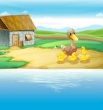 鸭子家庭在河附近的 免版税库存图片