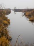 鸭子池塘在一有雾的天 免版税库存照片