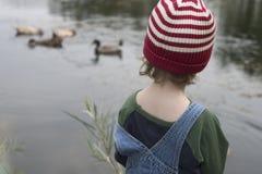 鸭子注意 免版税图库摄影