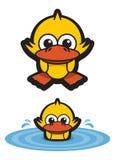 鸭子滑稽的池塘游泳 免版税库存照片