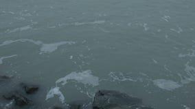 鸭子潜水入水 股票录像