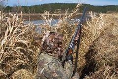 鸭子猎人在芦苇一个寻找的窗帘掩藏了 库存照片
