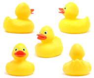 鸭子玩具 免版税库存照片