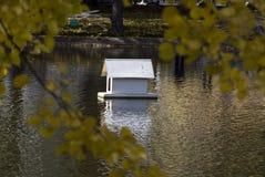 鸭子的一个房子在水到干净的池塘,秋天中反射了, 库存照片