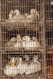 鸭子笼子家禽屠场 免版税库存图片