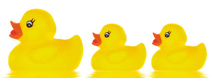 鸭子系列玩具 免版税库存照片