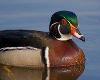 鸭子纵向木头 库存图片