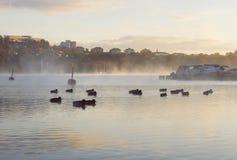 鸭子群在有薄雾的水早黎明的 小船和城市风景 图库摄影