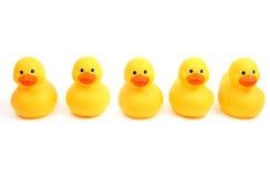 鸭子连续 免版税图库摄影