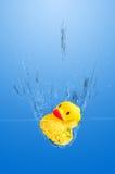 鸭子飞溅 免版税库存照片