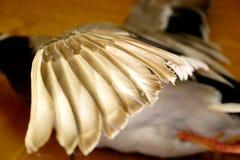 鸭子飞行 免版税库存照片