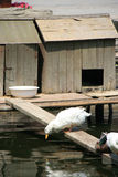鸭子-恭王府-北京-中国 库存图片