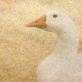 鸭子 库存图片