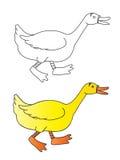 鸭子 库存例证