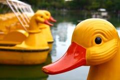 鸭子lumpini 免版税库存照片