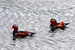 鸳鸯在北海公园湖在北京 库存照片