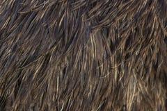 鸸羽毛的图象 免版税库存照片