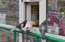 鸽子下落在报摊 库存照片