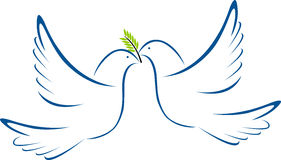 鸽子二白色 免版税图库摄影