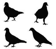 鸽子剪影 库存例证