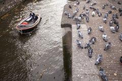鸽子和小船在阿姆斯特丹运河 库存照片