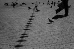 鸽子和步行者 库存照片