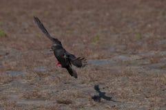 鸽子和他的阴影 免版税库存图片