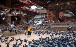 鸽子在加德满都Durbar广场,尼泊尔 免版税库存图片