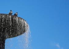 鸽子在喷泉沐浴 免版税库存图片