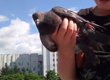 鸽子在手中,拿着鸠的婴孩 免版税图库摄影