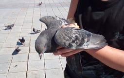 鸽子在手中,拿着鸠的婴孩 免版税库存图片