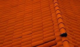 鸽子坐红色屋顶 老镇在杜布罗夫尼克 图库摄影