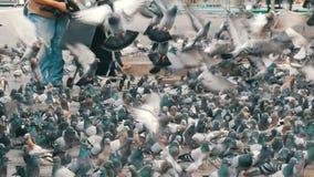 鸽子大群在年长妇女哺养的公园 股票录像