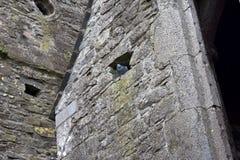 鸽子寻找在石墙02的风雨棚 免版税库存图片