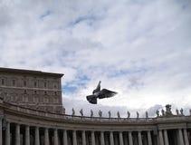 鸽子梵蒂冈 免版税图库摄影