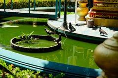 鸽子照片在水池的 免版税库存照片