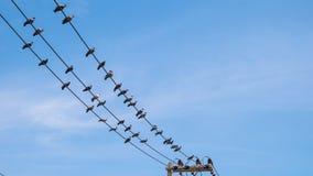 鸽子电导线的鸟举行 免版税库存照片