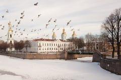 鸽子群在Nikolsky大教堂的在圣彼德堡 图库摄影