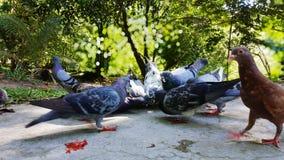 鸽子饲养时间自然美丽风景 免版税库存图片