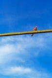 鸽子鸟坐在蓝天的一条射线 库存图片