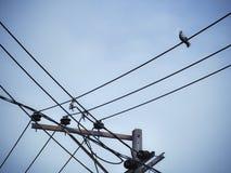 鸽子鸟坐电子供给动力的柱子 库存照片
