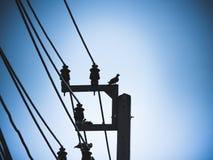 鸽子鸟坐电子供给动力的柱子 图库摄影