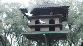 鸽子鸟房子在公园 股票视频