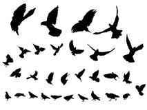 鸽子 图库摄影