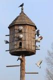 鸽房 免版税库存照片