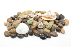 鹅卵石壳 图库摄影