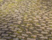 鹅卵石路细节 免版税库存照片
