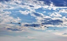 鹅嗨 免版税图库摄影