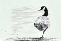 鹅在一只脚平衡 图库摄影