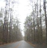 鹅小河国家公园,华盛顿,北卡罗来纳 免版税库存照片